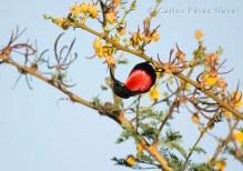 Hunter's Sunbird