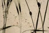Sombras de plantas con insectos