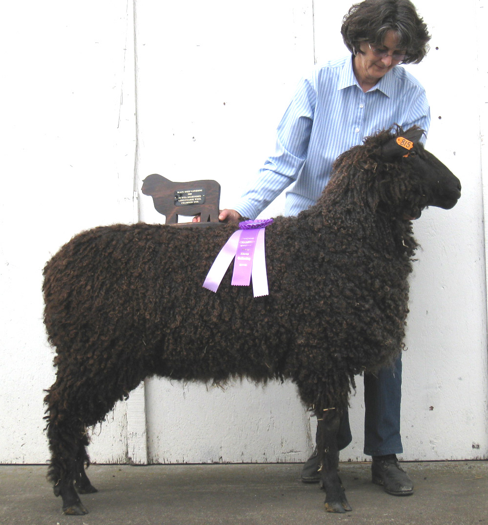 2009 Champion Ewe at Estes Park & BSG