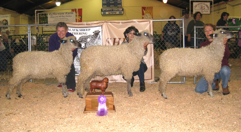 Champion Young Flock - Black Sheep Gathering 2009