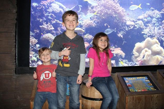 Explore the exhibits at the Houston Downtown Aquarium Carltonaut's Travel Tips