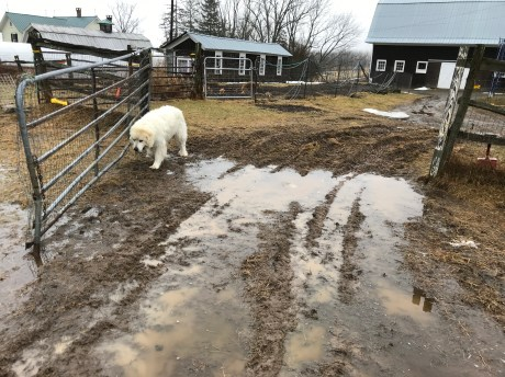 Gabe in the mud