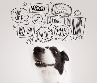 30221532 - cute black and white border collie with barking speech bubbles above her head