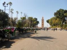 MarrakechHorses