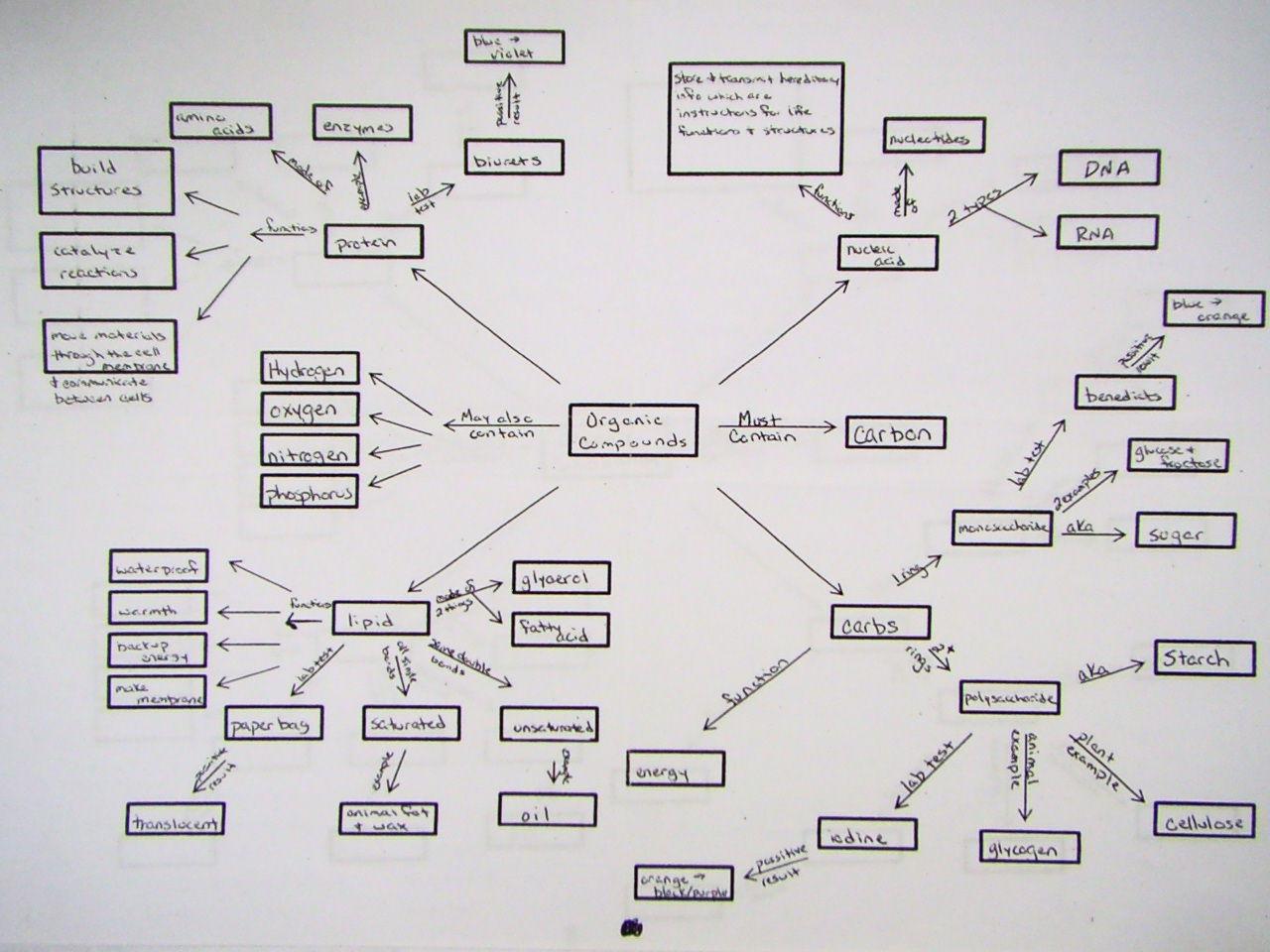Macromolecules Chart