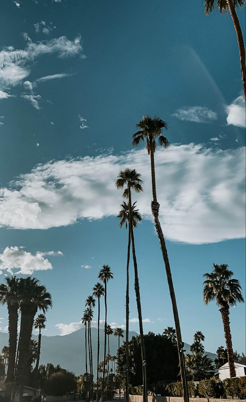 palmspringsblog (18)