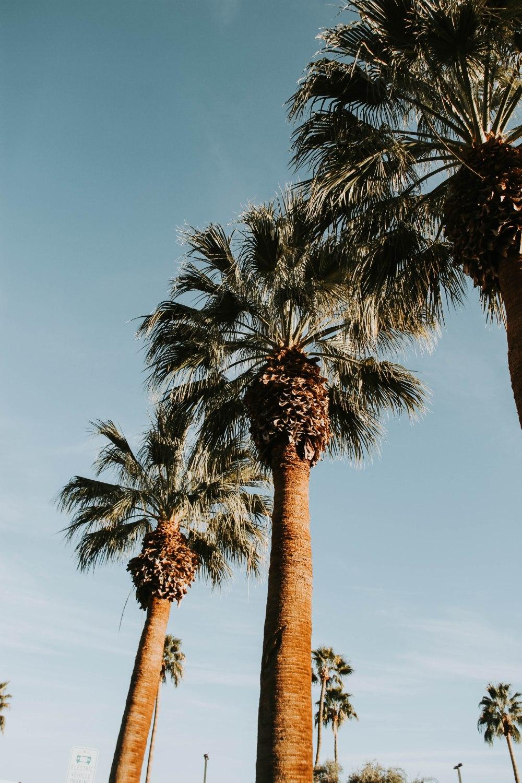 palmspringsblog (55)