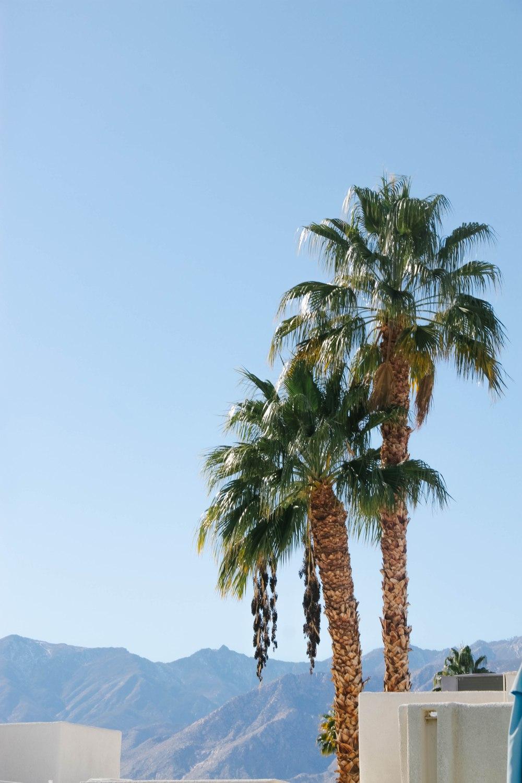 palmspringsblog (72)