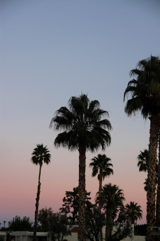 palmspringsblog (79)