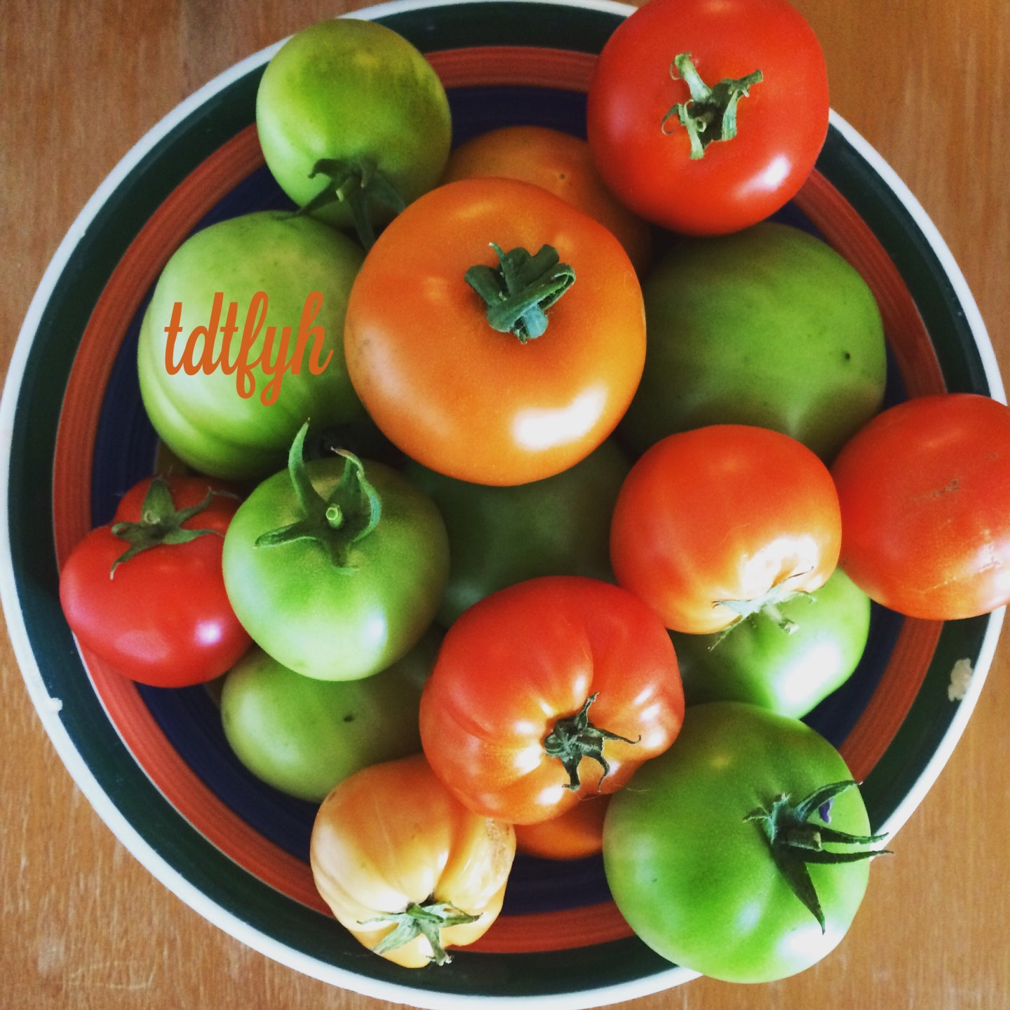 Growing a green thumb: tomatoes