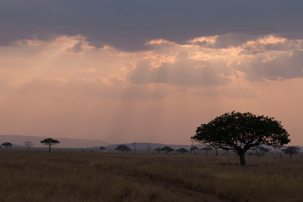 The most beautiful light as day one of safari comes to a close