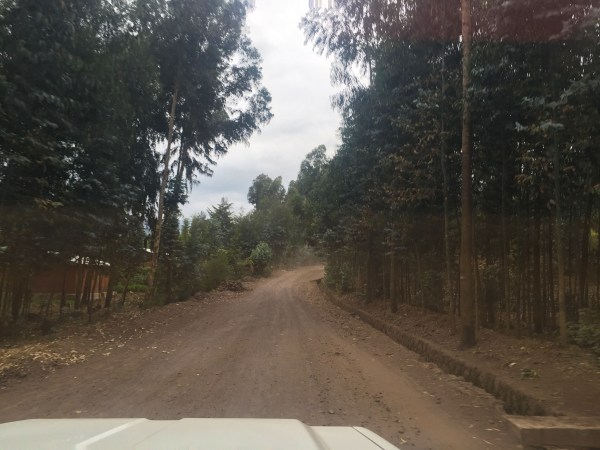 Drive to the start of your trek to find gorillas
