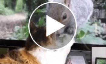 Gata de Carmen Dominicci descrube video para gatos