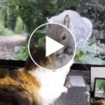 Gata descubre los videos para gatos