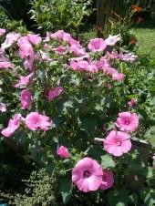 Blumen <3