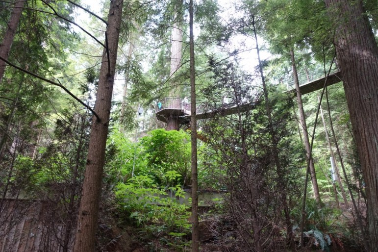Treetop Adventure, Capilano Suspension Bridge Park