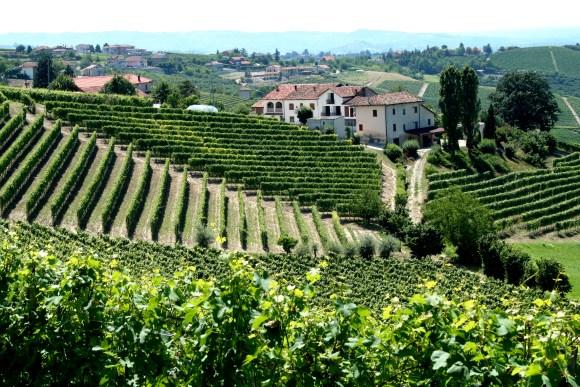 Piemonte Italy Vineyards with Village (Flickr Megan Mallen )