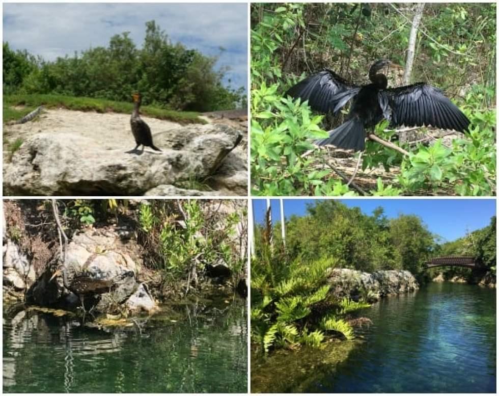 Arrange of Bird Watching on the Nature Tour - Fairmont Mayakoba