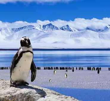 Luxury Cruises to Antarctica