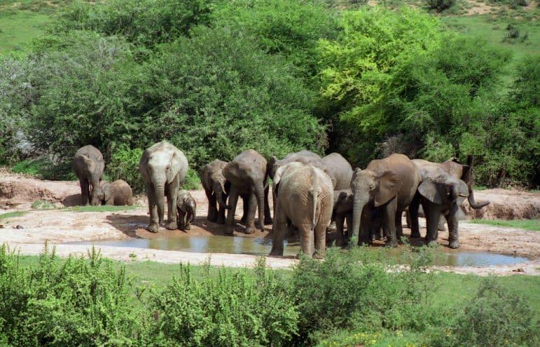 Addo Elephant National Park Photo Brian Snelson