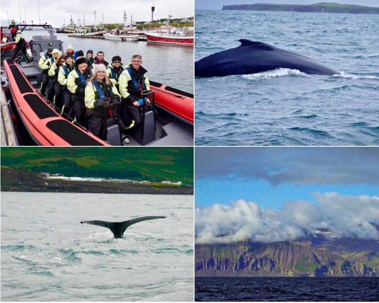 Our Whale Watching Adventure and the Humpback Whales we saw