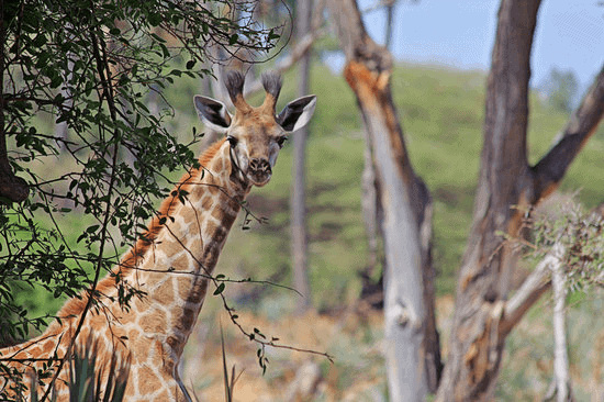 South African Safaris You Should See