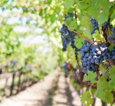 Uncorked Wine Tourism: Destinations Worth a Try