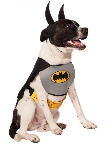 Costum Catel Batman