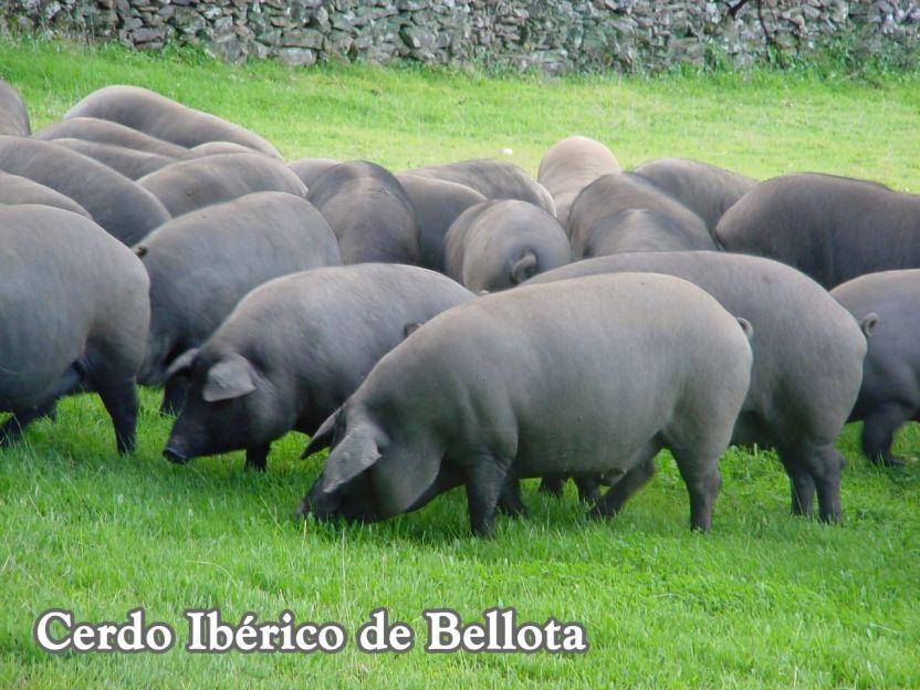 Carne de cerdo ibérico.