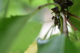 macro-insecte