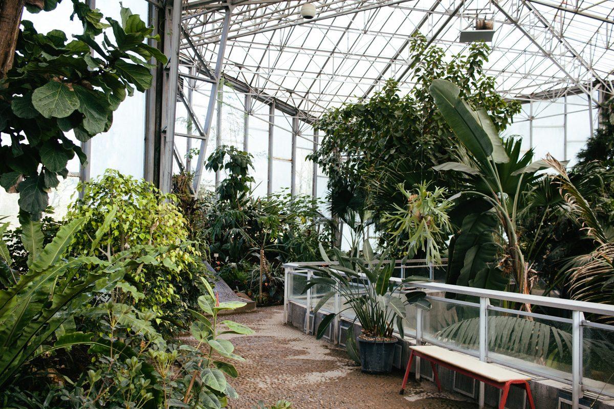 le jardin des plantes lille