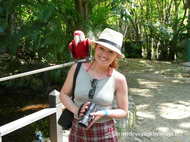 Le perroquet et moi - en république dominicaine