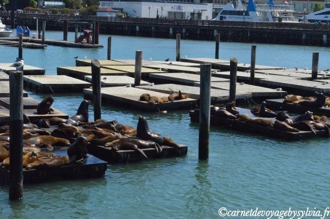 Pier 39 - Fisherman's Wharf à San Francisco