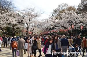 Comment organiser son voyage au Japon ?