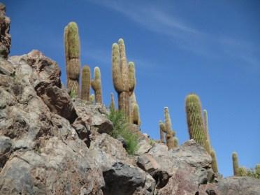 Vallée des cactus