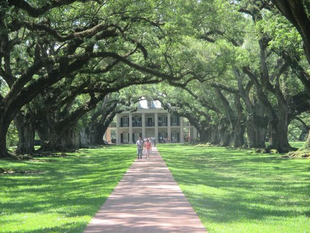 Vue depuis le Mississippi Plantation oak alley