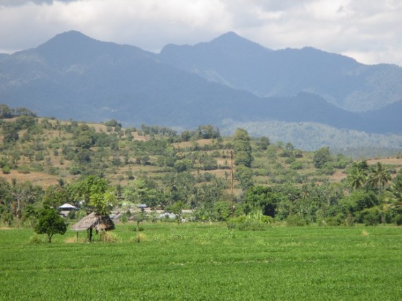 rizière nord Lombok
