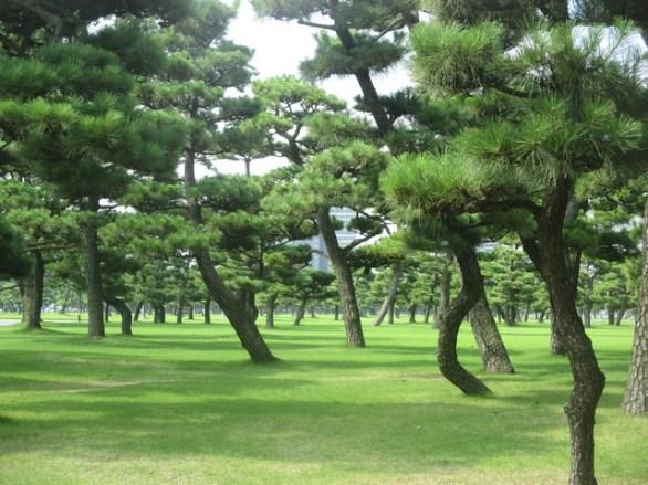 arbres de l'esplanade Tokyo