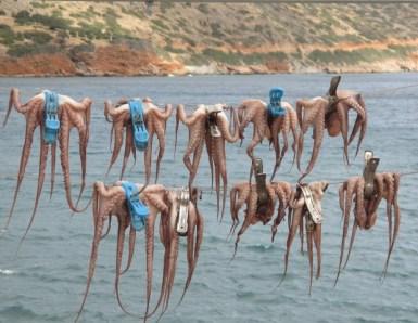 poulpes Elounda Crète