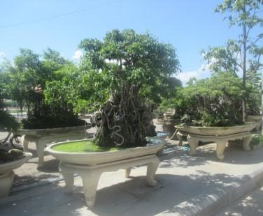 bonsai Quy Nhon