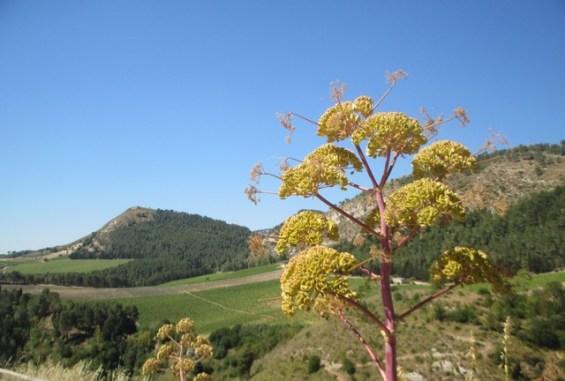 sites archéologiques Sicile
