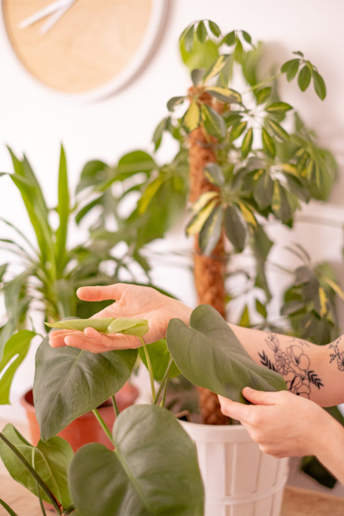 Entretien de mes plantes