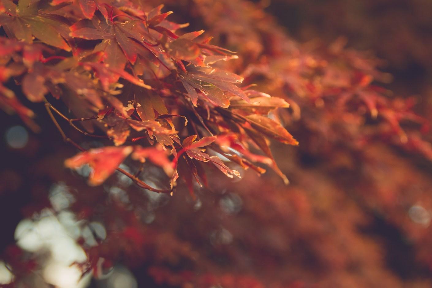Fall colors in Shinjuku