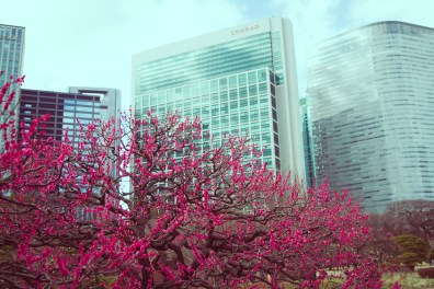 Hamarikyu garden, Tokyo