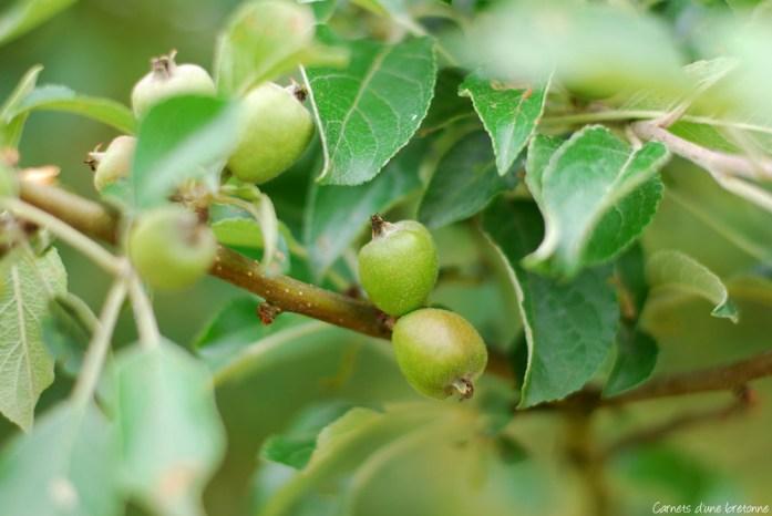 pommes-bio