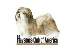 Carneys Havanese Haven, Affiliated with the Havanese Club of America