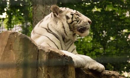 Mettez un tigre dans votre moteur pour une vie pleine de sens.