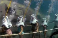 travesía buceo snorkell