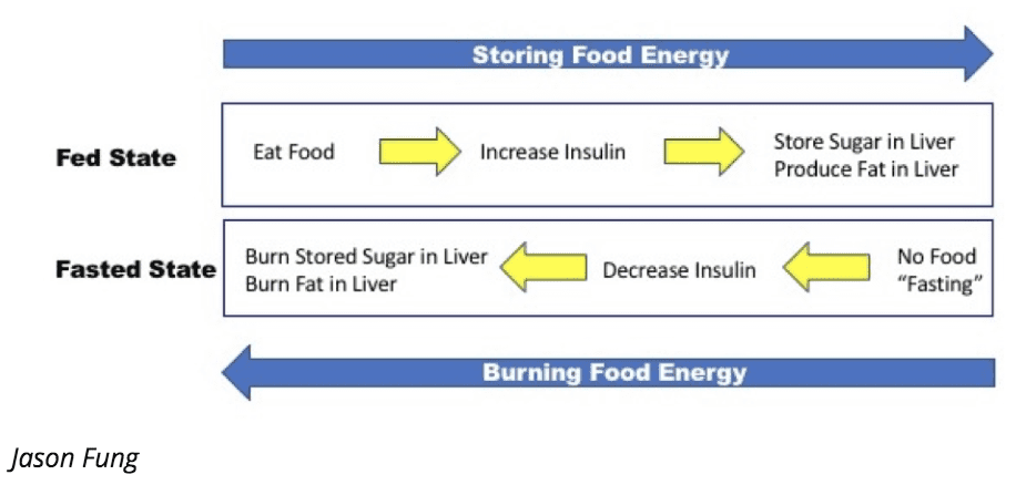 Fed and fasted states controlled by insulin