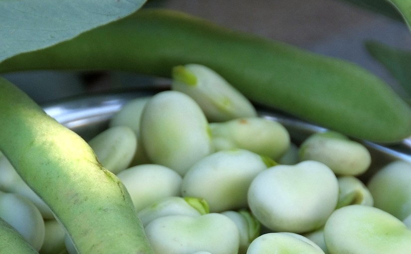 When to plant broad beans